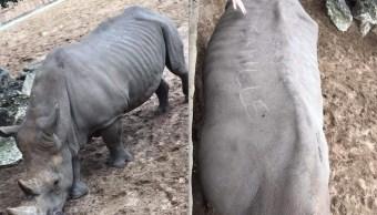 Lomo-rinoceronte-turistas-estupidos-escriben-nombres-zoologico