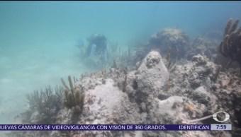 Sistema de arrecifes de México está enfermo