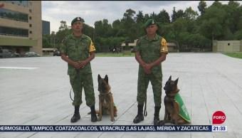Foto: Binomios Caninos Ejército Clave Rescates Sismo CDMX 19 Septiembre 2019