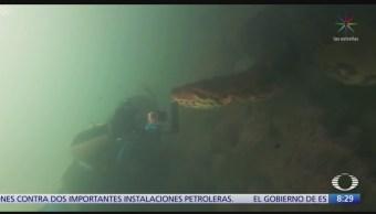 FOTO: Buzos encuentran anaconda de casi 7 metros de longitud, 16 septiembre 2019