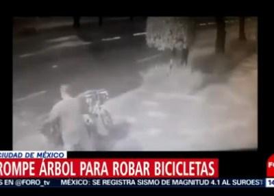 Captan en video robo de bicicletas atadas a árbol en CDMX