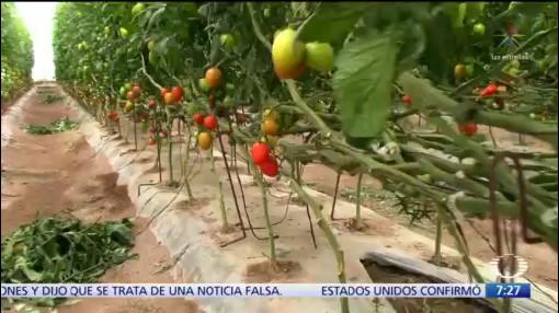 EU y México llegan a acuerdo sobre jitomate