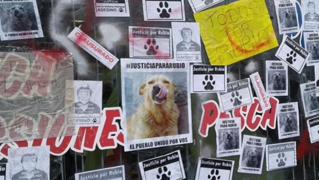 Argentina llora a 'Rubio', el perrito atado y arrastrado hasta la muerte