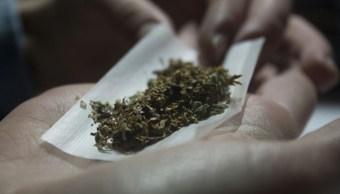 Foto Tenía bolsas de plástico que en su interior contenían hierba verde y seca con las características propias de la marihuana, 7 de septiembre de 2019 (Getty images, archivo)
