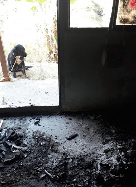 Foto Arriesgó la vida para salvar a perros de incendio en refugio para animales 17 septiembre 2019