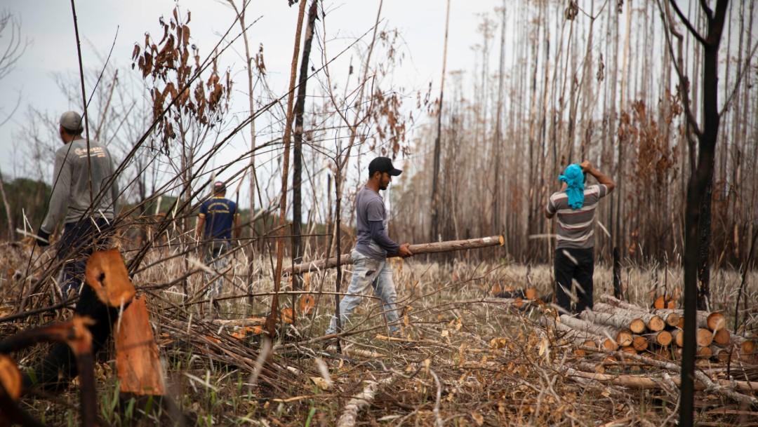 Foto: Limpieza en la selva amazónica tras incendios, 13 de septiembre de 2019, Brasil