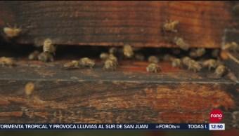 Muerte de abejas y árboles, efectos del cambio climático en México