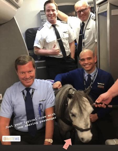 Foto Mujer viaja junto a su caballo en un vuelo comercial y se vuelve viral 4 septiembre 2019