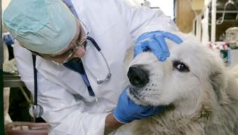 Enfermedad-misteriosa-perros-muertos-Veterinarios-Noruega