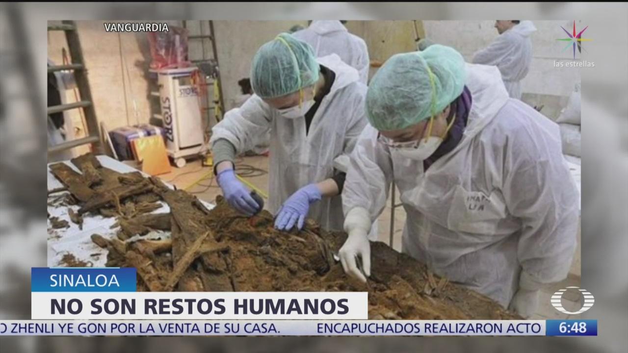 Restos óseos encontrados en Sinaloa no corresponden a humanos