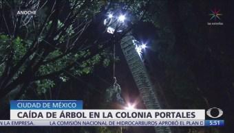 Cae árbol en la colonia Portales, CDMX