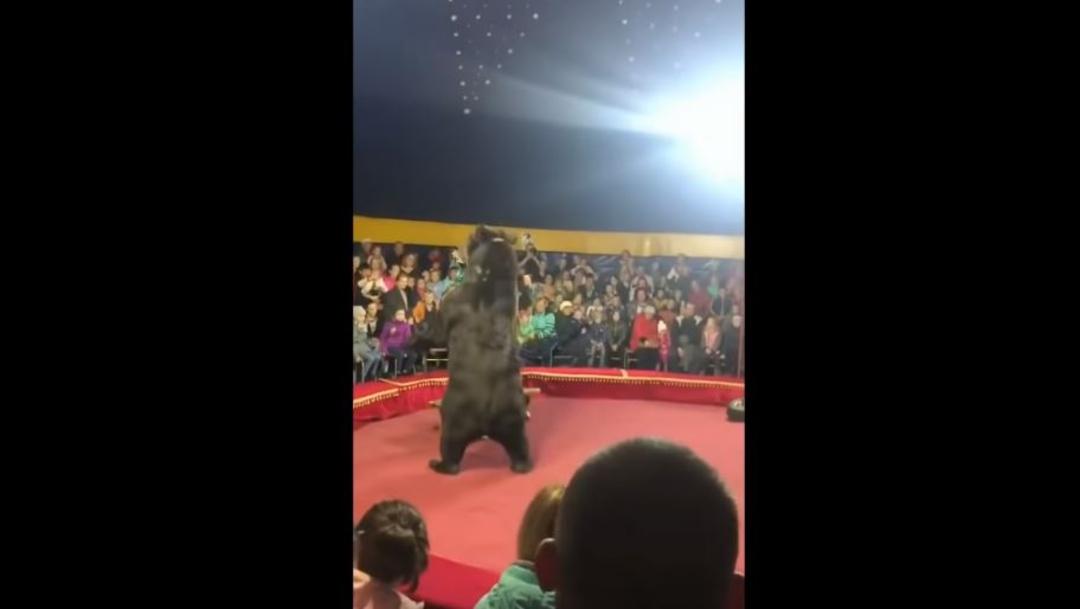 Foto: Reportes aseguran que el nombre del oso es Yashka y tiene 16 años, 24 de octubre de 2019 (ARMANDO MONROY/CUARTOSCURO.COM)