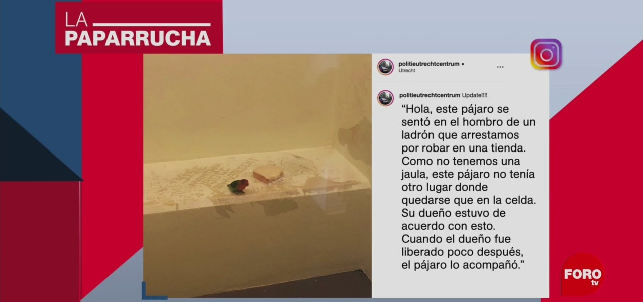 Foto: Detienen Pájaro Sospechoso Robo Tienda Noticias Falsas 10 Octubre 2019