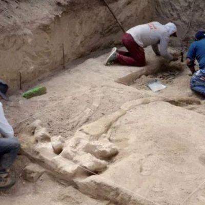 Hallan en Puebla restos fósiles de un mamut