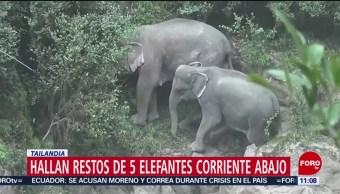 Hallan restos de cinco elefantes cerca de una cascada en Tailandia