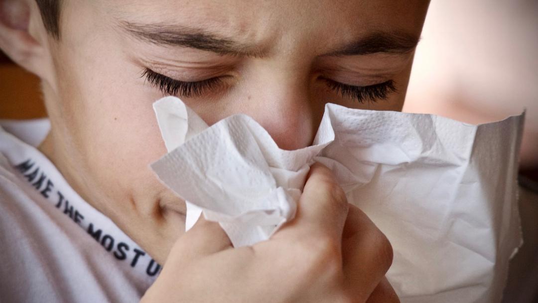 Foto: moco protege y combate bacterias. 17 Octubre 2019