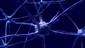Foto: neuronas cerebro humano ejercicio. 27 Octubre