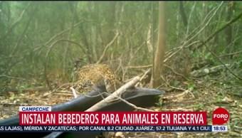 FOTO: Instalan bebederos para animales reserva Campeche tras sequía