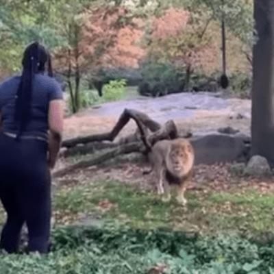 Video: Mujer entra a fosa de leones en zoológico y los reta bailando