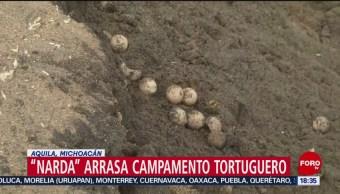 FOTO: Narda Arrasa Campamento Tortuguero Michoacán