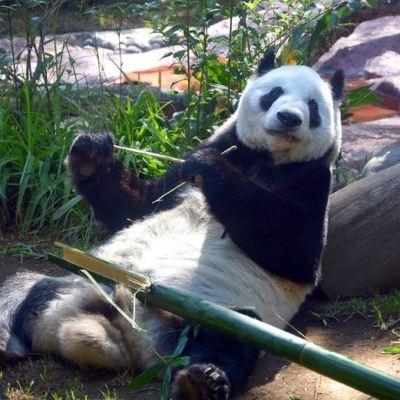 ¿Quiénes son los animales viejitos del Zoológico de Chapultepec?