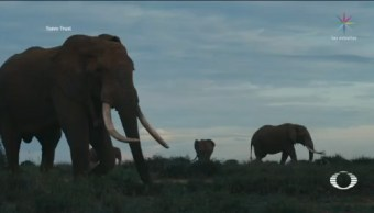 Foto: Reserva Kenia Protege Elefantes Súper-Colmillos 14 Octubre 2019