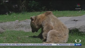 Viejitos de Chapultepec, animales seniles de zoológico