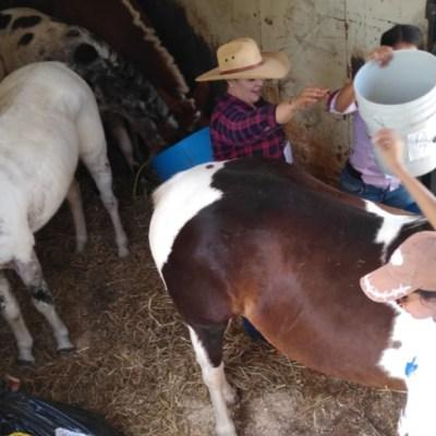 Arriban 245 caballos para el desfile del 20 de noviembre en CDMX