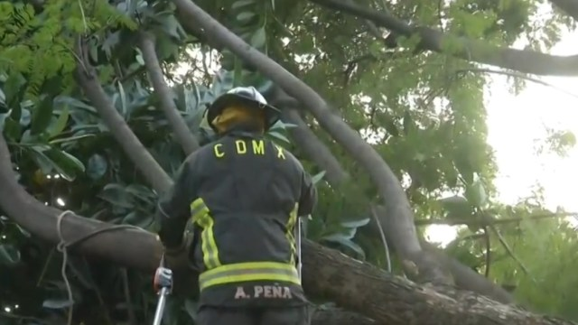 FOTO Bombero cae mientras cortaba ramas de árbol atorado con cables (FOROtv)