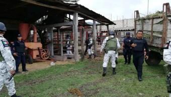 Foto: La Fiscalía de Distrito Selva aseguró tres ecofaisanes, cinco pavorreales, un venado cola blanca, un tigrillo, un jaguar, tres mini pigs y un perro bull terrier
