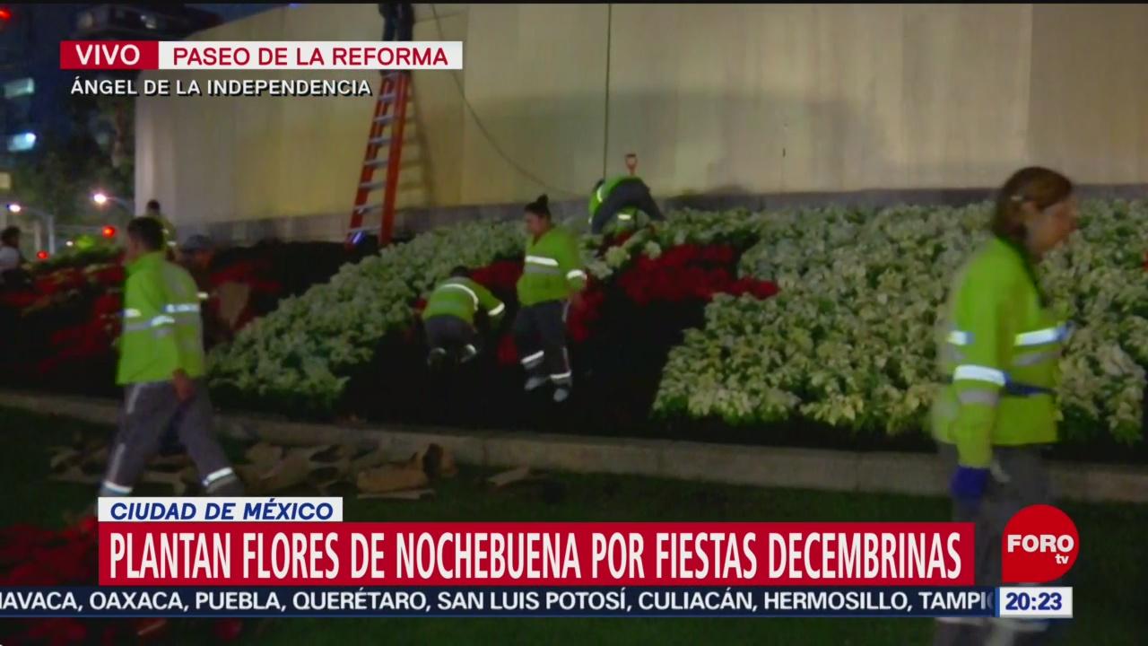 Colocan flores de Nochebuena en el Ángel de la Independencia - Noticieros Televisa