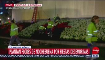 FOTO: Colocan flores de Nochebuena en el Ángel de la Independencia, 16 noviembre 2019