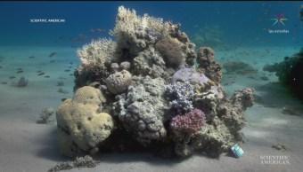 FOTO: Crean algoritmo que corrige colores de fotografías tomadas bajo el agua, 15 noviembre 2019