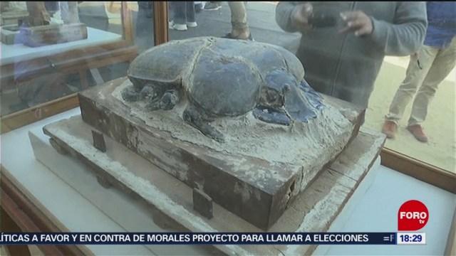 FOTO: Descubren momias animales Egipto