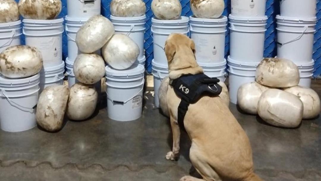 Foto: La droga fue detectada por binomios caninos al realizar revisiones aleatorias en el establecimiento, 31 de octubre de 2019 (Twitter @Central_CM)