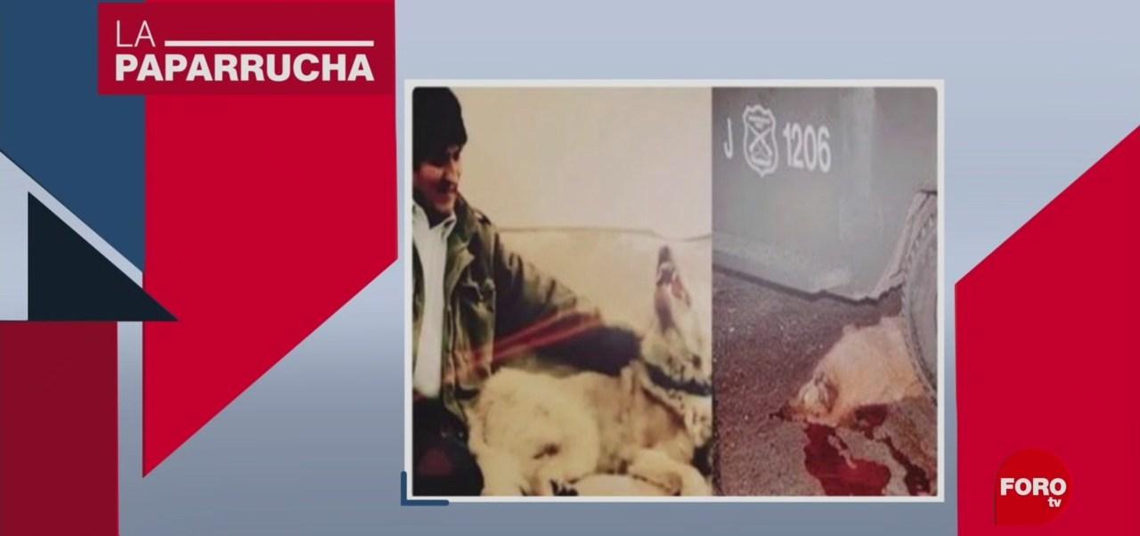 Foto: Ejército Atropella Perro Evo Morales Noticias Falsas 19 Noviembre 2019