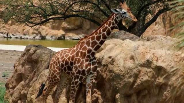 Foto: Continúan muertes en zoológico de Nuevo León, 27 de noviembre de 2019 (Twitter @ElGritonDigital)