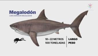 Foto: Encuentran Fósiles Megalodón Cueva Yucatán 4 Noviembre 2019