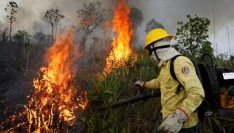Selva amazónica se está secando por la actividad humana