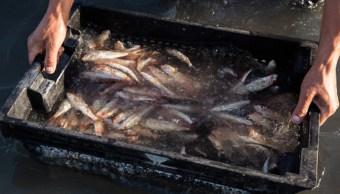 Imagen: Según los científicos, si se implementan reformas la industria pesquera podría aumentar las capturas en un 20% comparado con la actualidad, 19 de noviembre de 2019 (Getty Images, archivo)