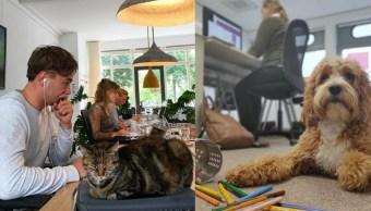 ¿Llevar mascotas al trabajo en verdad reduce el estrés?