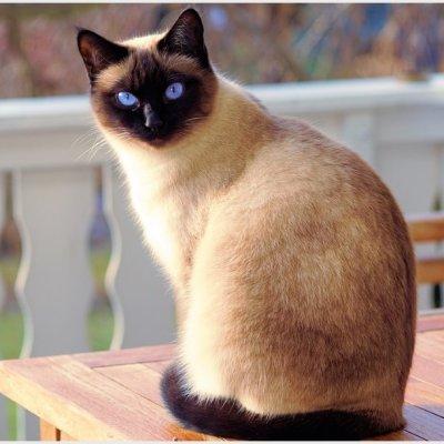 Por rasguño de gato mujer es inducida al coma