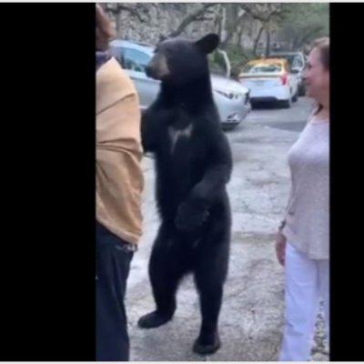VIDEO: Oso se para en dos patas y 'acaricia' a mujer en Nuevo León