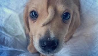 Foto Abandonan a perrito porque nació con una cola en la cabeza 14 noviembre 2019