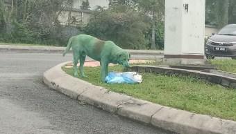 Foto Joven encuentra a perro pintado de verde y buscando comida 14 noviembre 2019
