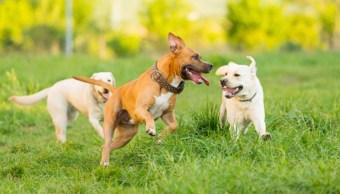 Perros ayudan en la conservación de especies.