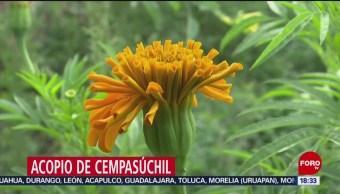 FOTO: Realizan acopio reciclaje cempasúchil Tláhuac