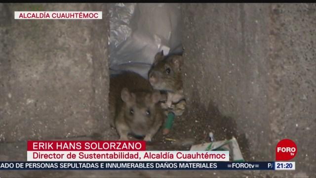 Foto: Suspenden Campaña Exterminio Ratas Alcaldía Cuauhtémoc 26 Noviembre 2019