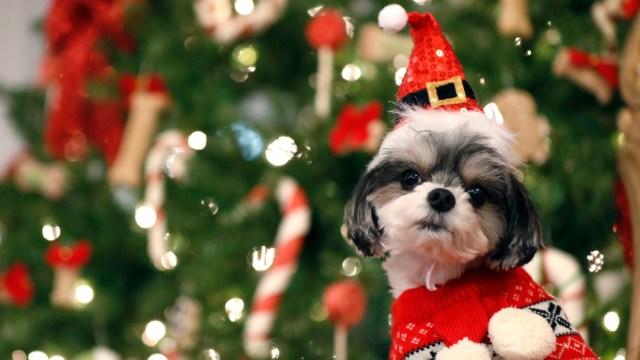 perro navidad mascota