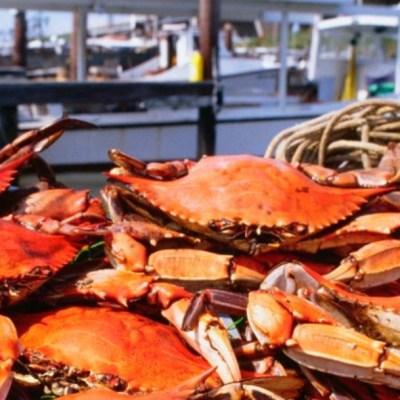 Medio millón de cangrejos han muerto por desechos plásticos